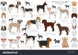 Black Mouth Cur Dog Stock Illustrations ...