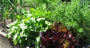 a beginner s guide to vegetable gardening