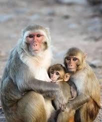 monkey with makeup b saubhaya makeup