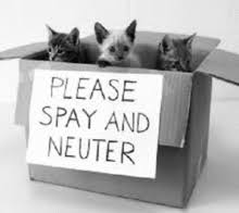 Spay Neuter Roundup NW LEWIS COUNTY '19