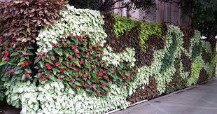 living green walls india should look
