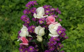 ورود رائعة وجميلة مجموعة من اروع الازهار المختلفة الالوان اروع