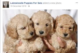puppy scams how i nearly fell