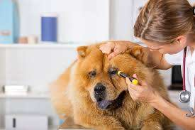 runny nose in dogs symptoms causes