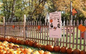 Fargo Pumpkin Patch Reopens Despite Covid 19 Agweek
