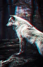 wolf wallpapers iphone hd wolf