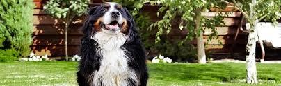 Marietta Hidden Dog Fence Installation Dogwatch