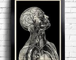 Anatomy Wall Decal Etsy