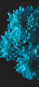 صور خلفيات زهور للموبايل Hd صور ورود ٢٠٢٠ Oppo A9 2020