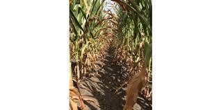 Drought webinars to begin in Iowa July 30 | Morning Ag Clips