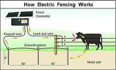 30 All About Fencing Ideas Electric Fence Fence Livestock