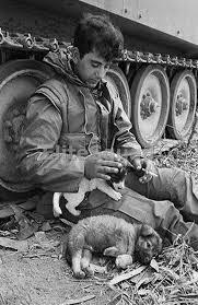 Vietnam War Photo member of A Troop 1st Cav 23rd Infantry whit dogs 537 |  Vietnam war photos, Vietnam war, Vietnam