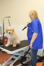 Pet Grooming Services At Weatherford West :: Walden Farm & Ranch