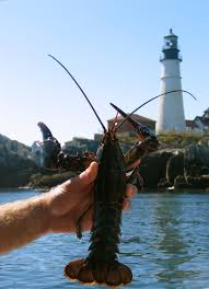 Let's talk Maine Lobster: All you need ...