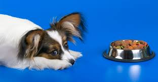 best food for papillon puppies dogs