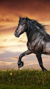 wallpaper horse 5k 4k wallpaper