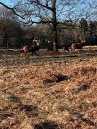 Richmond Park (Richmond-upon-Thames ...