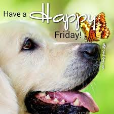 hve a happy friday pictures photos
