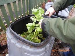 Rats Etc In Compost Www Carryoncomposting Com