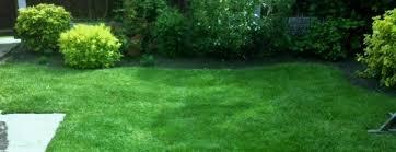 lawn care runcorn lawn care treatment