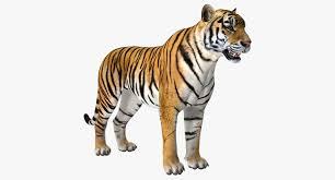 Tiger 3D model - TurboSquid 1271766