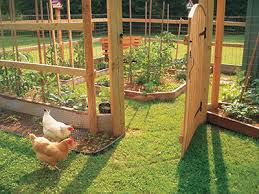 Gardening With Chickens By Lisa Steele Getting Started