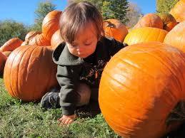 Abby Hill Farms Country Market (or that day Boo fondled a pumpkin ...