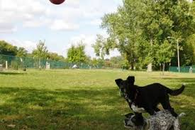 Off Leash Dog Parks In St Louis Mo Bringfido