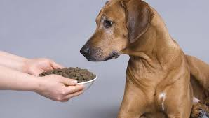 dog food for arthritis and joint health