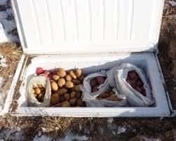 build a backyard root cellar from an