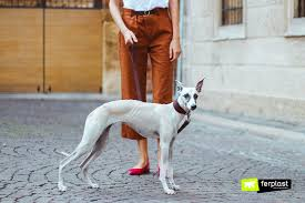 long legged dog
