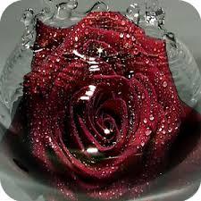 3d rose live wallpaper 93c2c6n