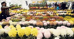 Nepal becoming self-reliant in flowers: Import of flowers on a slump this  Tihar - myRepublica - The New York Times Partner, Latest news of Nepal in  English, Latest News Articles