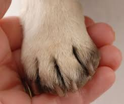 t your dog s nails country