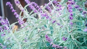 heat tolerant plants that resist the