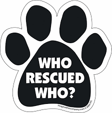 Amazon Com Car Magnet Paw Who Rescued Who 5 5 X 5 5 Pet Memorial Products Pet Supplies