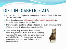 ppt how to manage your diabetic cat