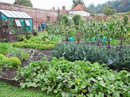 How to Make a Vegetable Patch - BBC Gardeners' World Magazine
