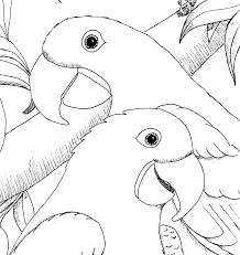 Kleurplaten Dieren Papagaaien Kleurplaten Vogels Tekeningen