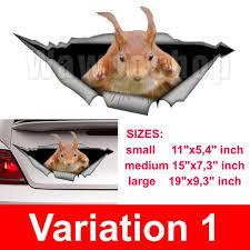 Squirrel Car Decal Funny Car Decal Vinyl Decal Car Etsy