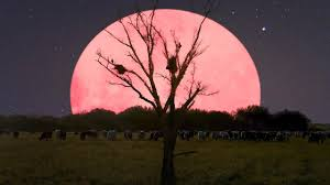 Super Pink Moon 2020: What is a Super ...