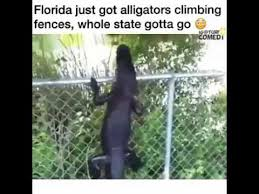 Alligator Climbs Over Fence And Eats Child Must Watch Youtube