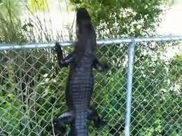 Alligators And Crocodiles Can Climb Trees3 Hoax Or Fact
