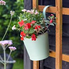 Fence Balcony Hanging Pot Sage Error Category Record Not Available Blackbrooks Garden Centres