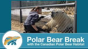 Basics Of Training Polar Bear Break Youtube