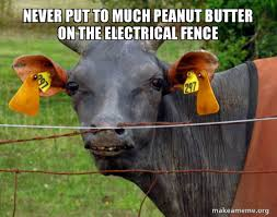Never Put To Much Peanut Butter On The Electrical Fence Hairless Cow Make A Meme