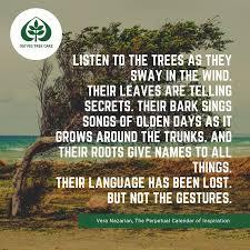 tree quotes ostvig tree care