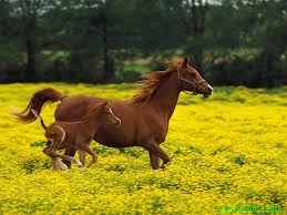 Nguồn gốc Việt Nam của tên 12 con giáp - Ngọ- Ngũ -ngựa