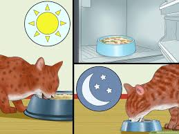 how to cook for cats with pictures