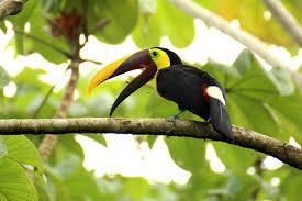 Free Images : tree, bird, beak, tropical, fauna, hornbill, tropics ...